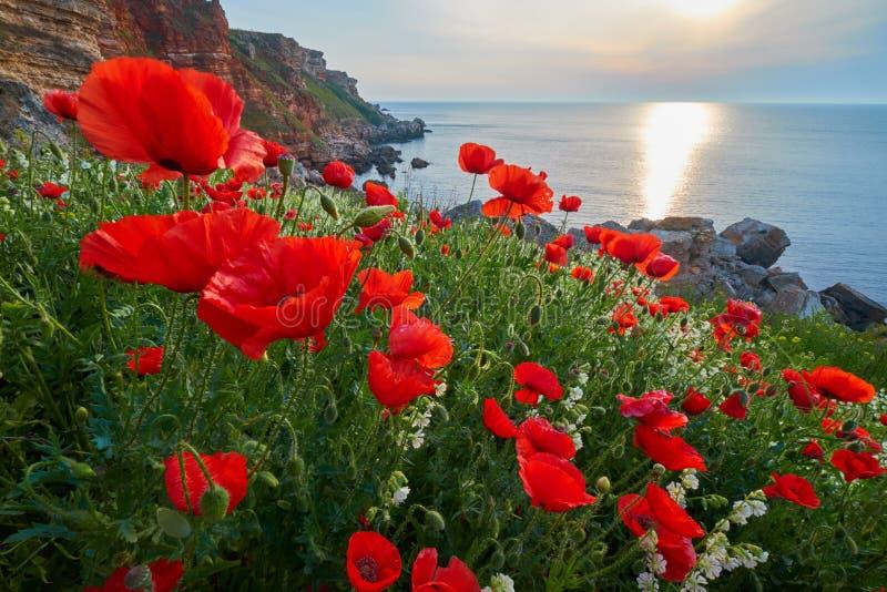 Flores brillantes de la amapola contra el agua azul marino DOF bajo imágenes de archivo libres de regalías