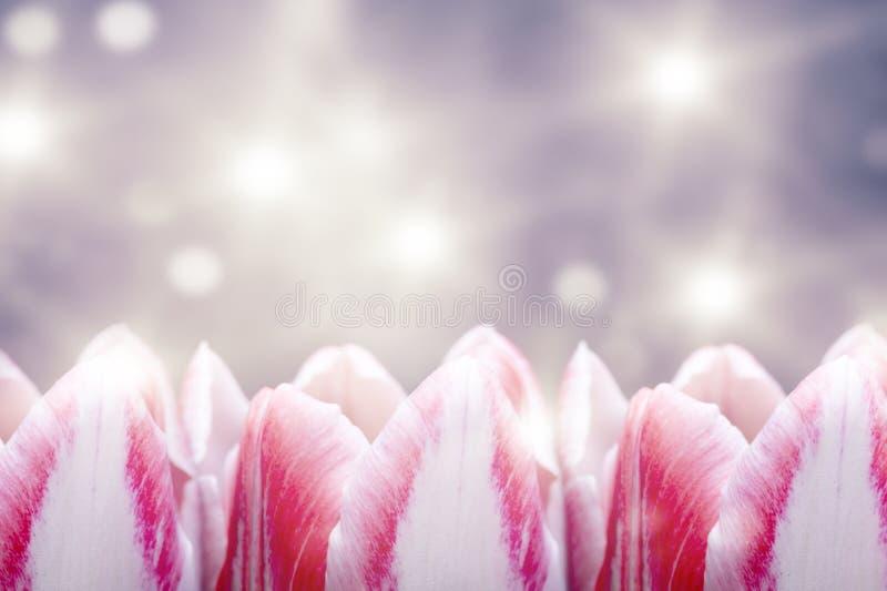 Flores brillantes del tulipán en el fondo colorido imagen de archivo