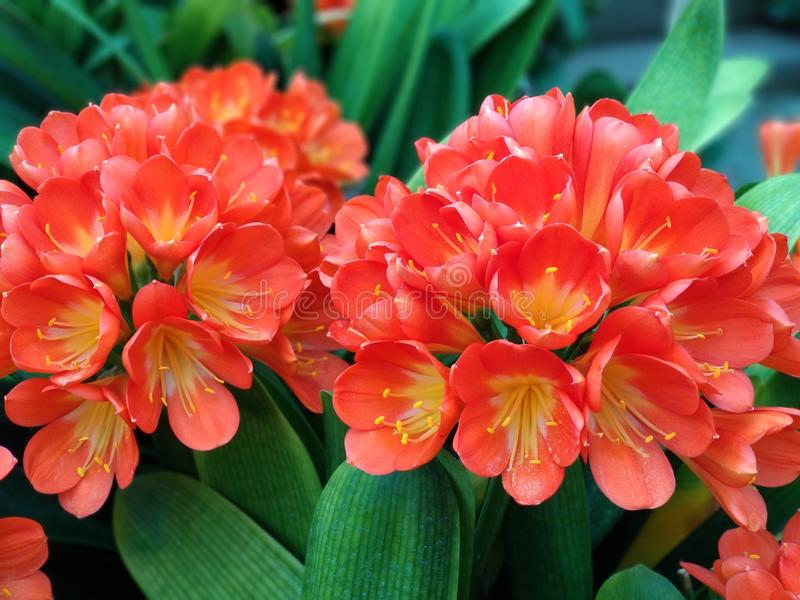 Flores brillantes en el jard?n foto de archivo