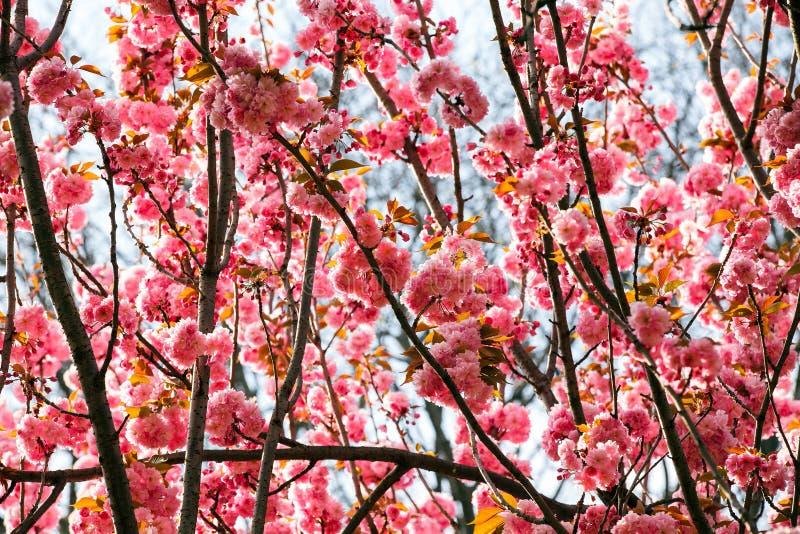 Flores brillantes en primavera imagenes de archivo