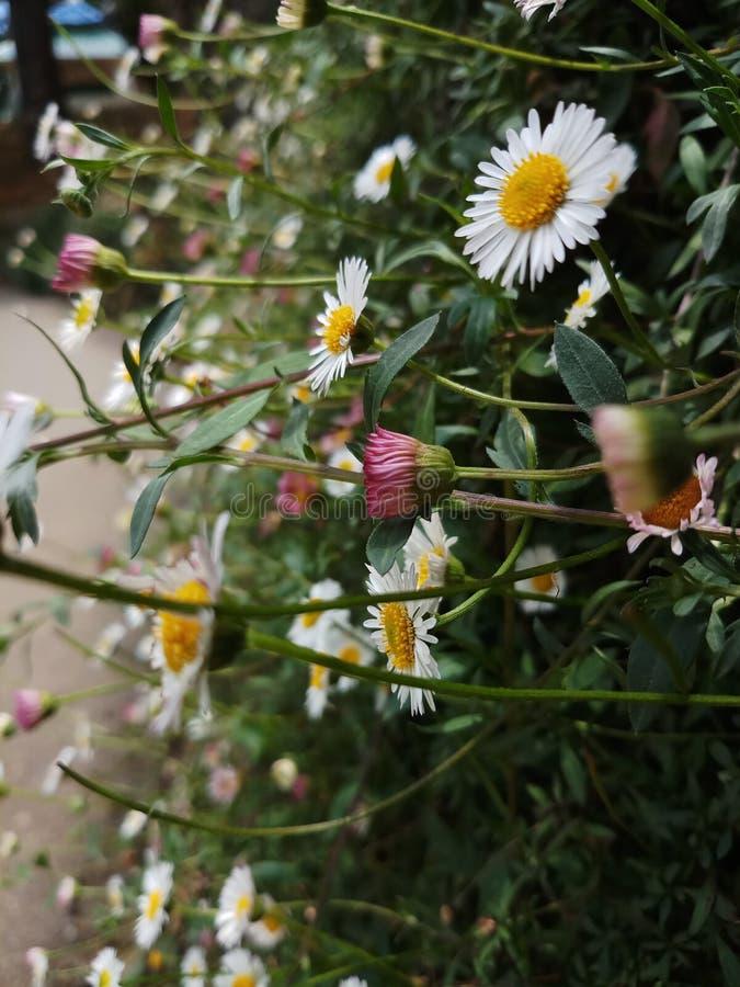 Flores brillantes hermosas en cerca fotos de archivo
