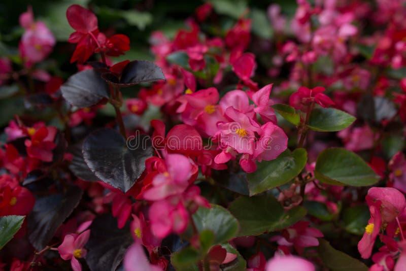 Flores brillantes que crecen en la calle fotografía de archivo libre de regalías