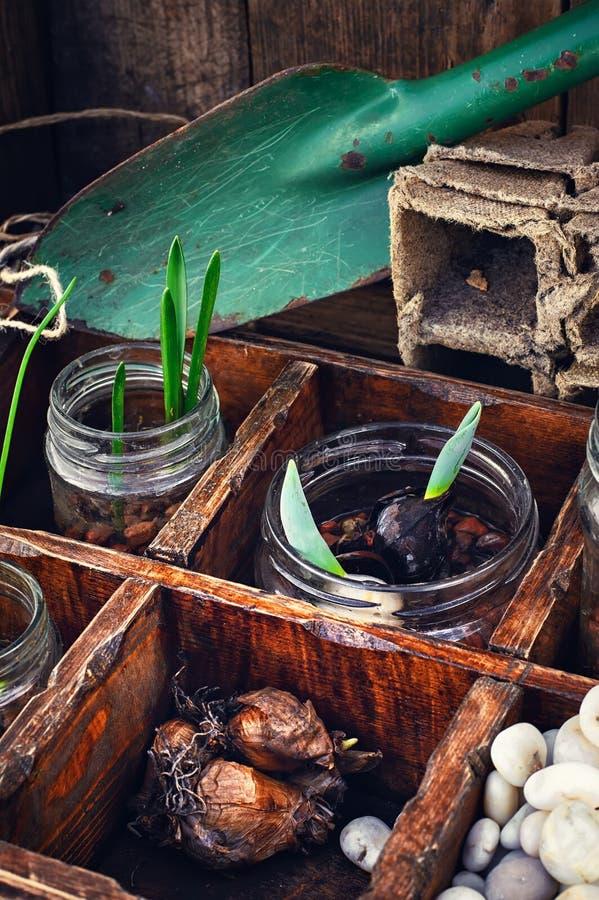 Download Flores Brotadas En Los Tarros De Cristal Foto de archivo - Imagen de flora, crezca: 64205780