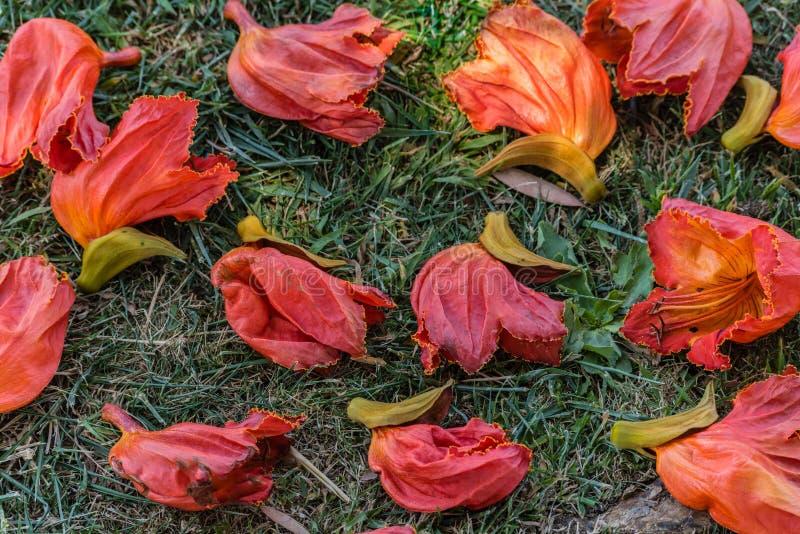 Flores caídas imagens de stock royalty free