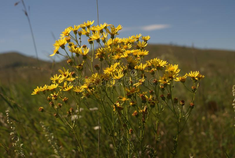 Flores, campo, pintura da natureza fotos de stock