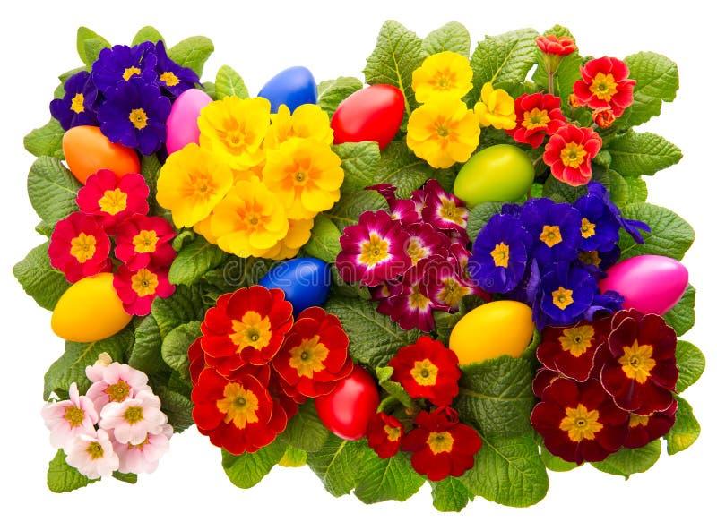 Flores clasificadas del primula con los huevos de Pascua foto de archivo libre de regalías