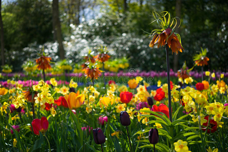 Flores clasificadas holandés 3 imagen de archivo libre de regalías