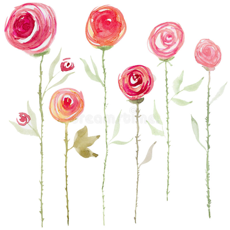 Flores color de rosa de la acuarela ilustración del vector