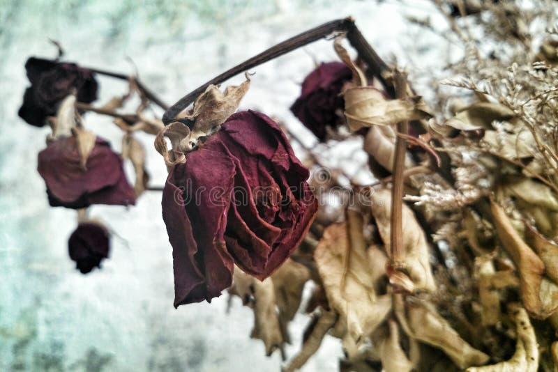 Flores color de rosa muertas y secas imagenes de archivo
