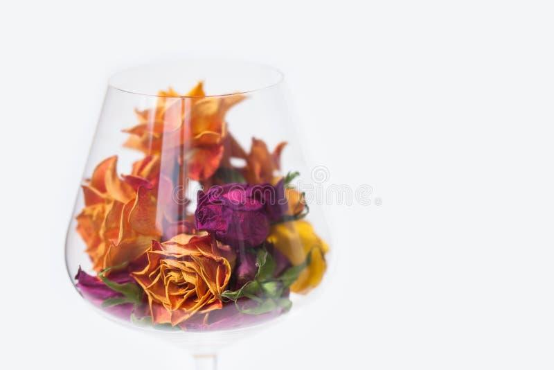 Flores color de rosa secadas en la copa de vino, fondo blanco opinión macra del pétalo de la flor del violete del amarillo anaran imagen de archivo
