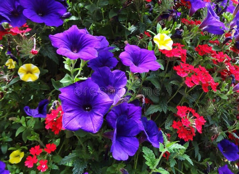Flores coloreadas múltiplo que florecen junto fotos de archivo