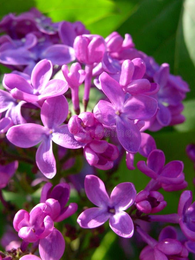 Flores coloridas foto de stock