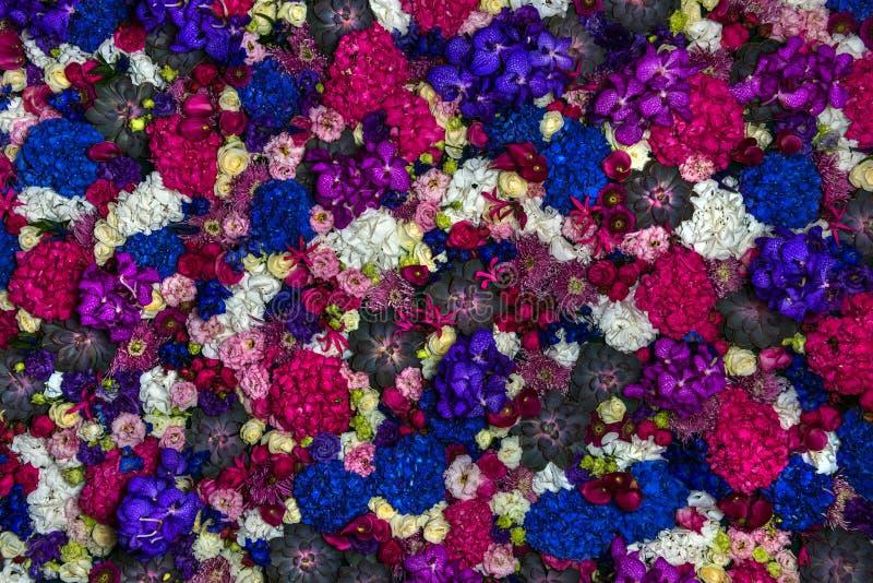 Download Flores coloridas foto de archivo. Imagen de horizontal - 44855058