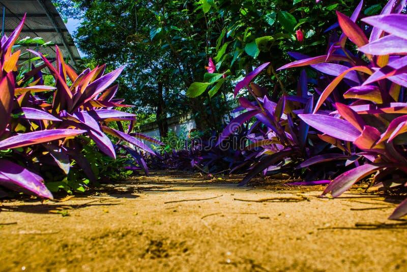 Flores coloridas foto de archivo