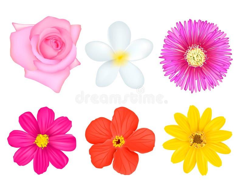 Flores coloridas ajustadas ilustração do vetor