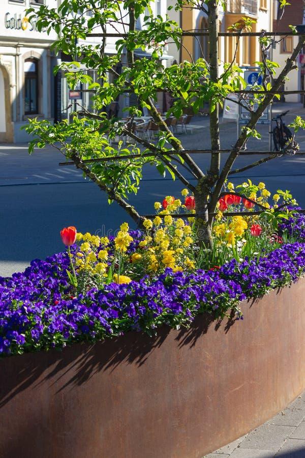 flores coloridas da cidade da primavera imagens de stock royalty free