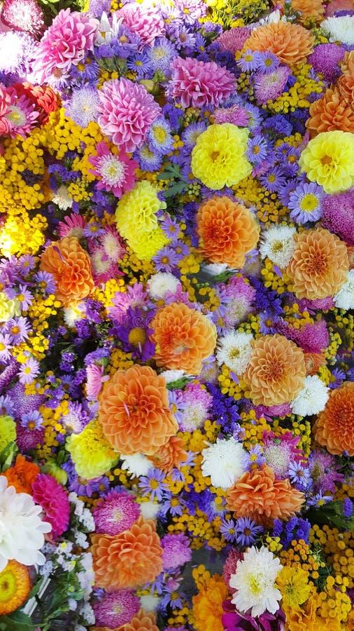 Flores coloridas da dália fotos de stock
