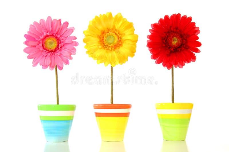 Flores coloridas da mola foto de stock