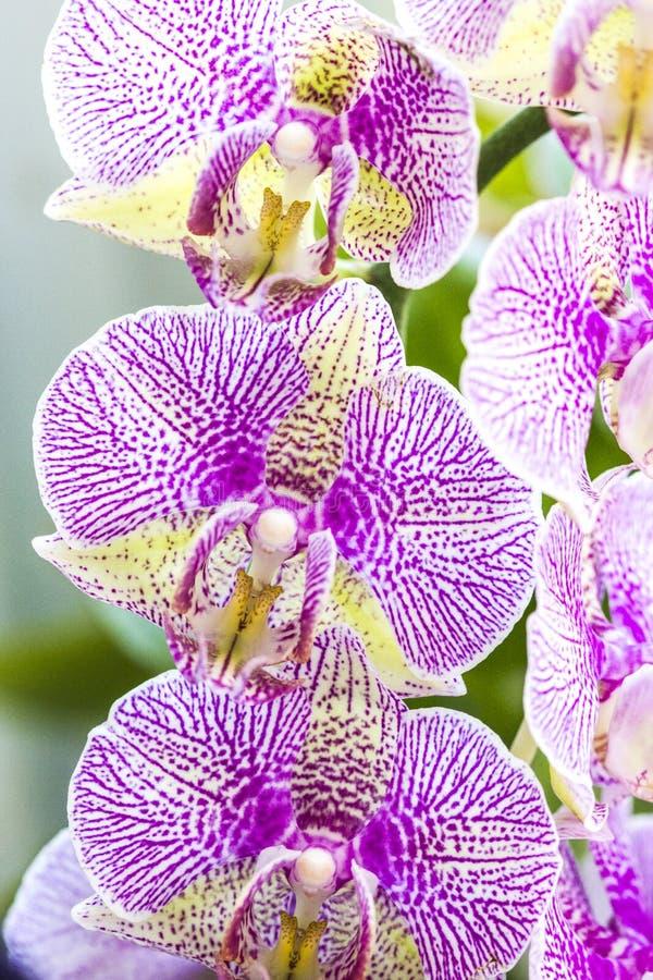 Flores coloridas da orquídea fotografia de stock royalty free