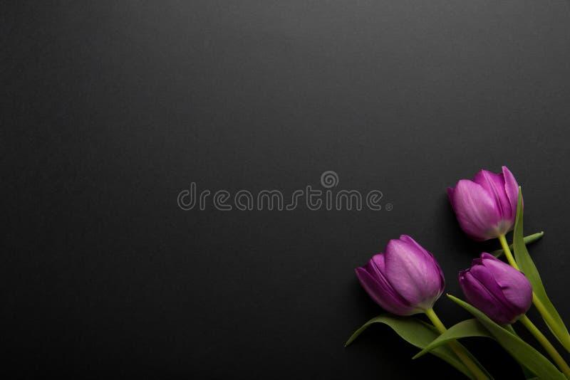 Flores coloridas das tulipas da mola no fundo preto Vista superior com espaço da cópia Três tulipas cor-de-rosa no preto imagem de stock