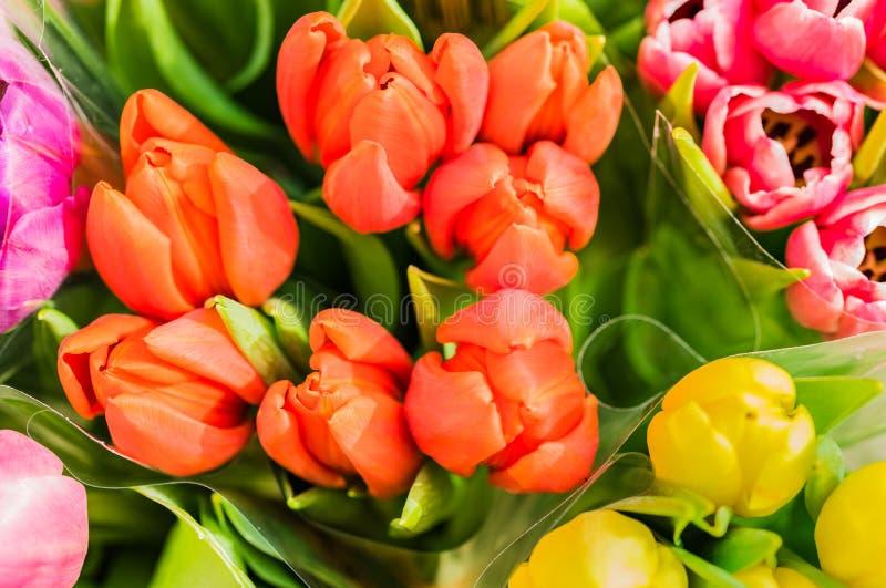 Flores coloridas das tulipas, opinião superior do close-up imagem de stock royalty free