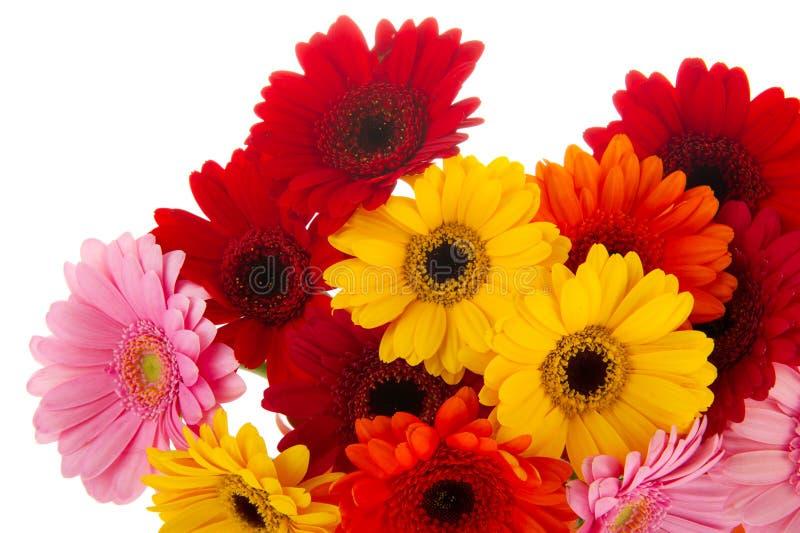 Flores coloridas de canto de Gerber fotos de stock