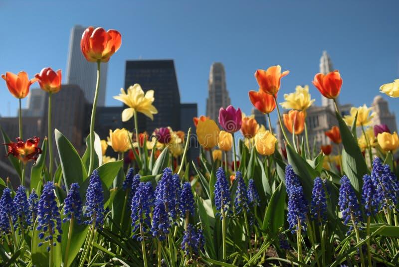 Chicago na flor fotos de stock royalty free