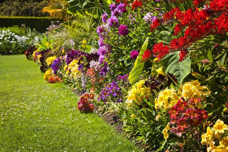 Flores coloridas del jardín imágenes de archivo libres de regalías