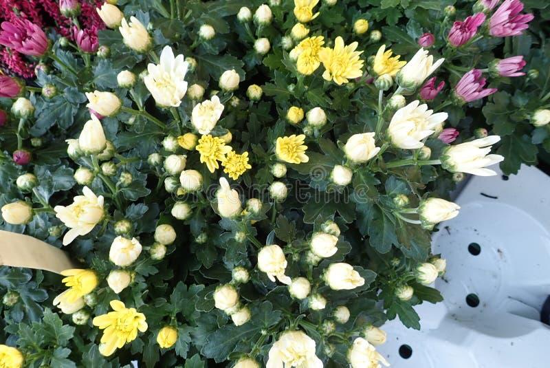 Flores coloridas del otoño con el brezo fotos de archivo libres de regalías