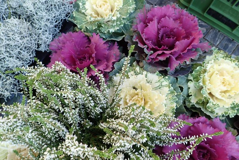 Flores coloridas del otoño con el brezo imágenes de archivo libres de regalías