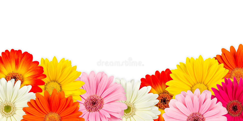 Flores coloridas do gerbera fotografia de stock