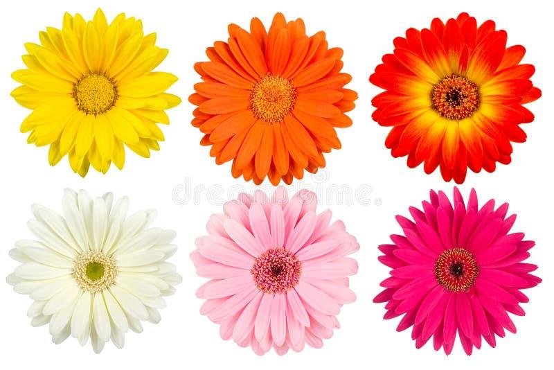 Flores coloridas do gerbera foto de stock royalty free