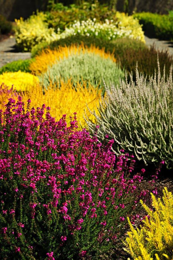 Flores coloridas do jardim foto de stock royalty free