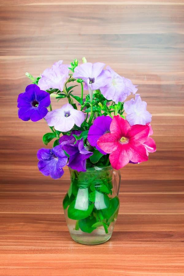 Flores coloridas do petúnia em um jarro de vidro imagem de stock