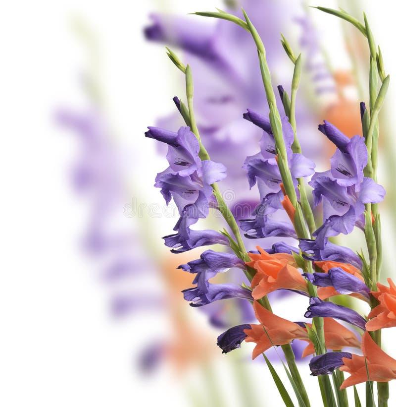 Download Flores do tipo de flor imagem de stock. Imagem de planta - 29837171