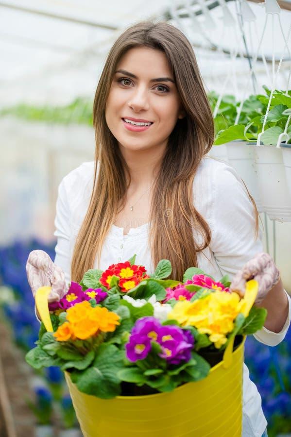 Flores coloridas en la estación de primavera foto de archivo