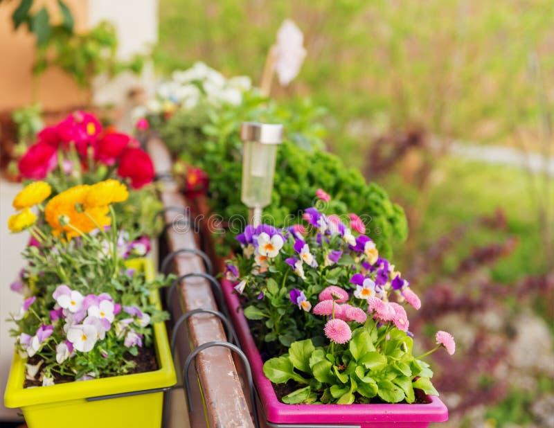 Flores coloridas en potes en el balcón imágenes de archivo libres de regalías