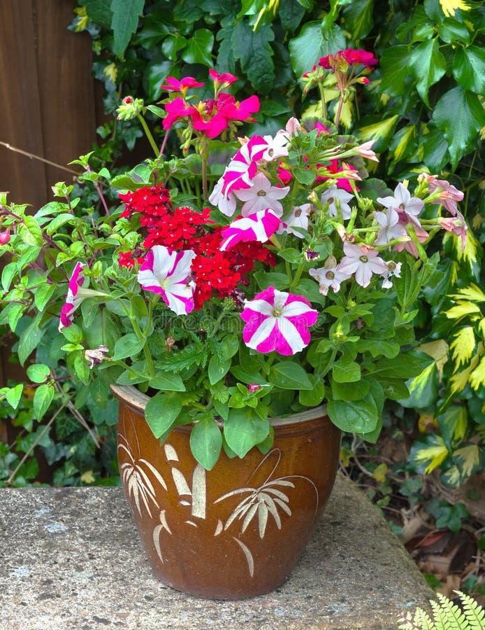 Flores coloridas en un pote; petunia; geranio; nicociana fotografía de archivo