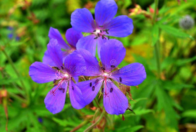 Flores coloridas A imagem de fundo das flores coloridas imagem de stock royalty free