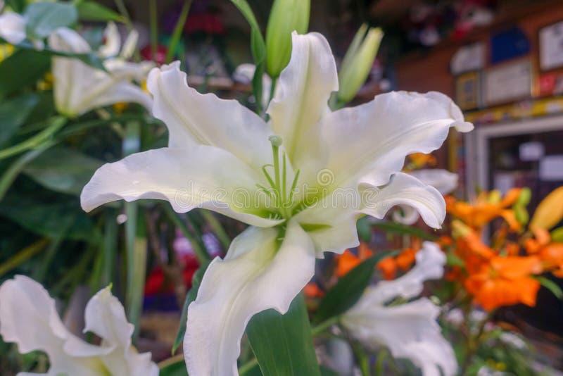 Flores coloridas, mercado de la flor imagen de archivo libre de regalías
