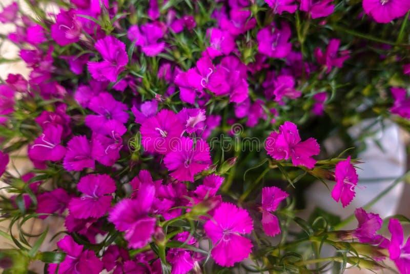 Flores coloridas, mercado de la flor imagenes de archivo