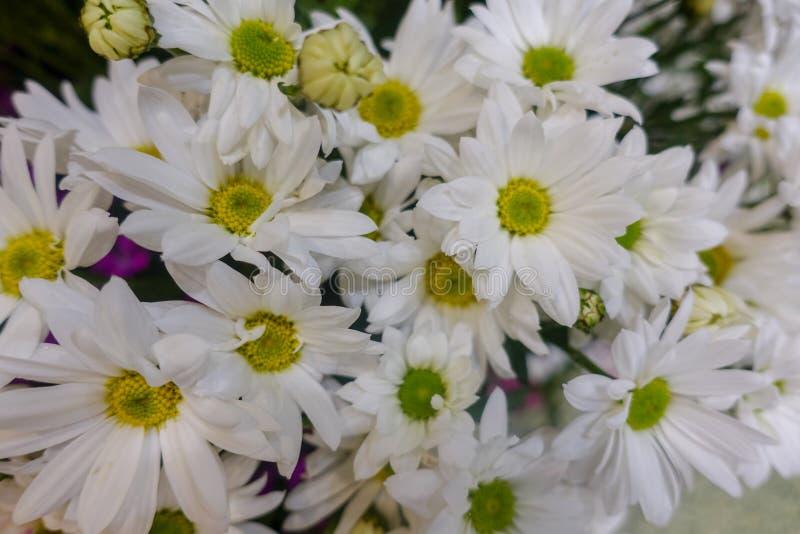 Flores coloridas, mercado de la flor foto de archivo