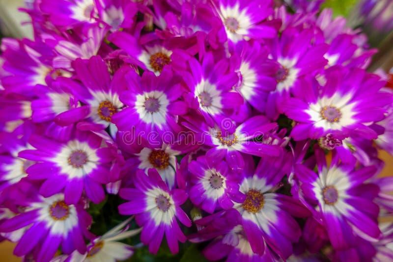 Flores coloridas, mercado de la flor fotos de archivo libres de regalías