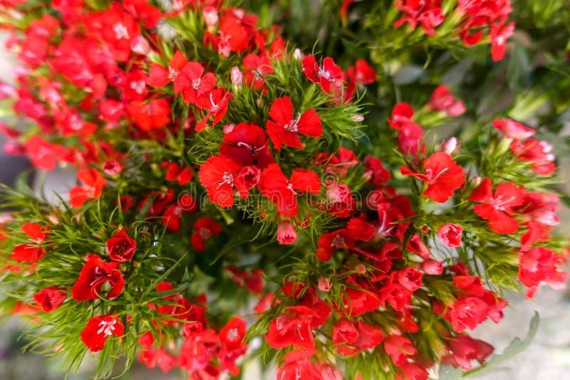 Flores coloridas, mercado de la flor fotografía de archivo