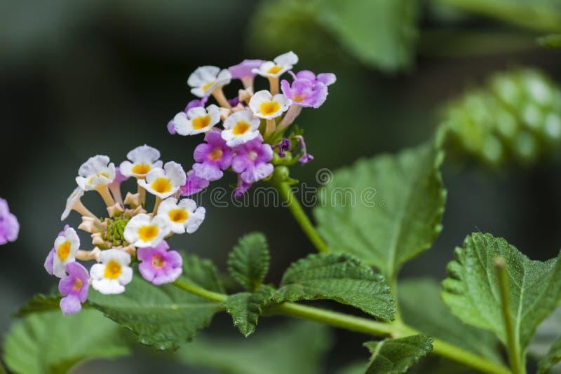 Flores coloridas no jardim fotografia de stock