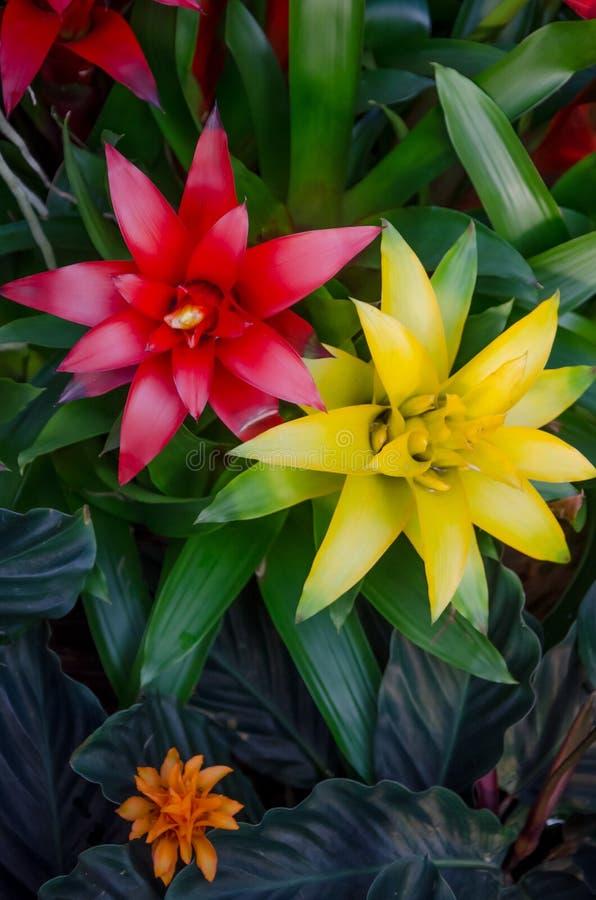 Flores coloridas no jardim de Kew, Londres imagem de stock