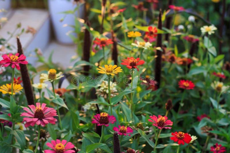Flores coloridas no jardim Dof raso, foco seletivo sobre imagens de stock