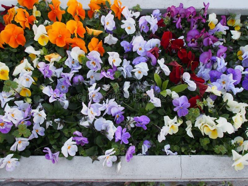 Flores coloridas Osaka Japan Travel da rua fotografia de stock