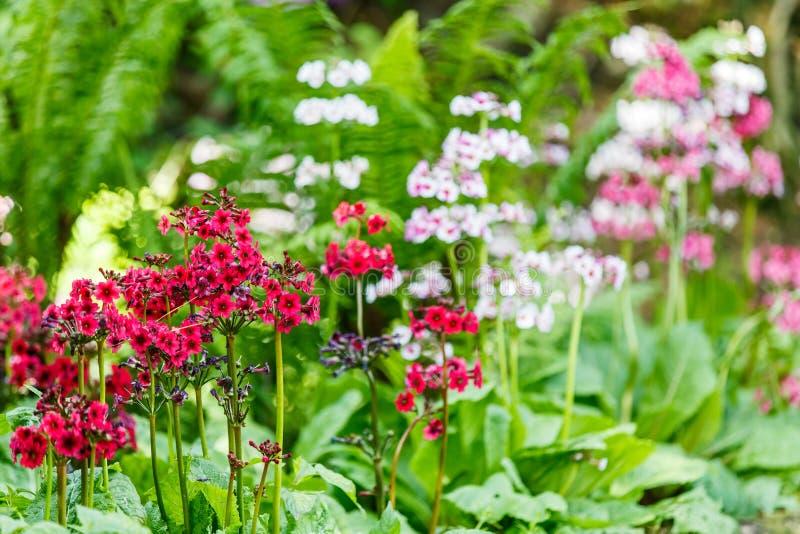 Flores coloridas pequenas fotos de stock royalty free