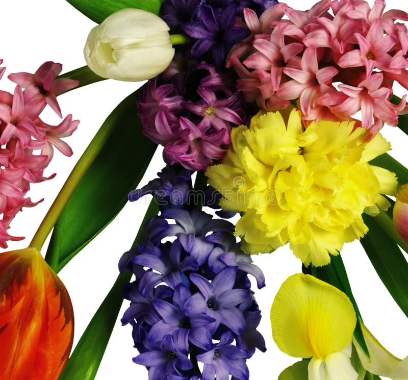 Flores coloridas pequenas no branco imagens de stock
